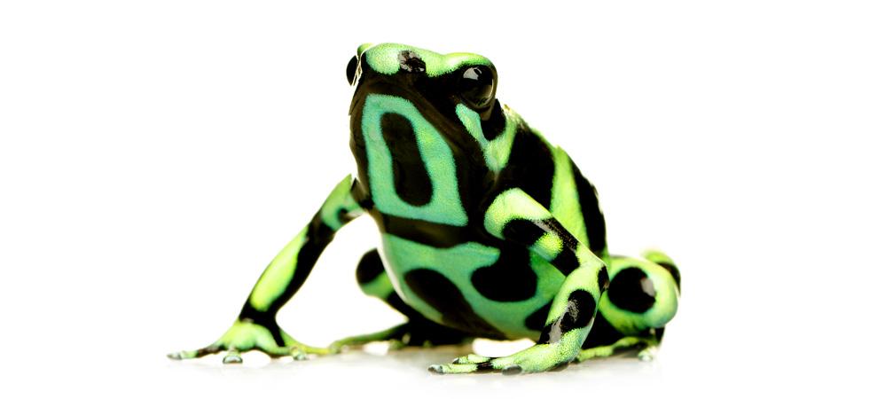 poison-frog.jpg