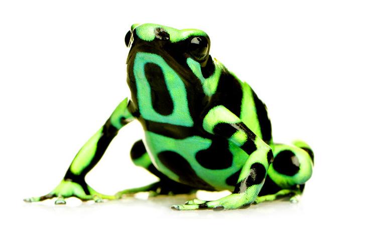 poison-frog-home.jpg