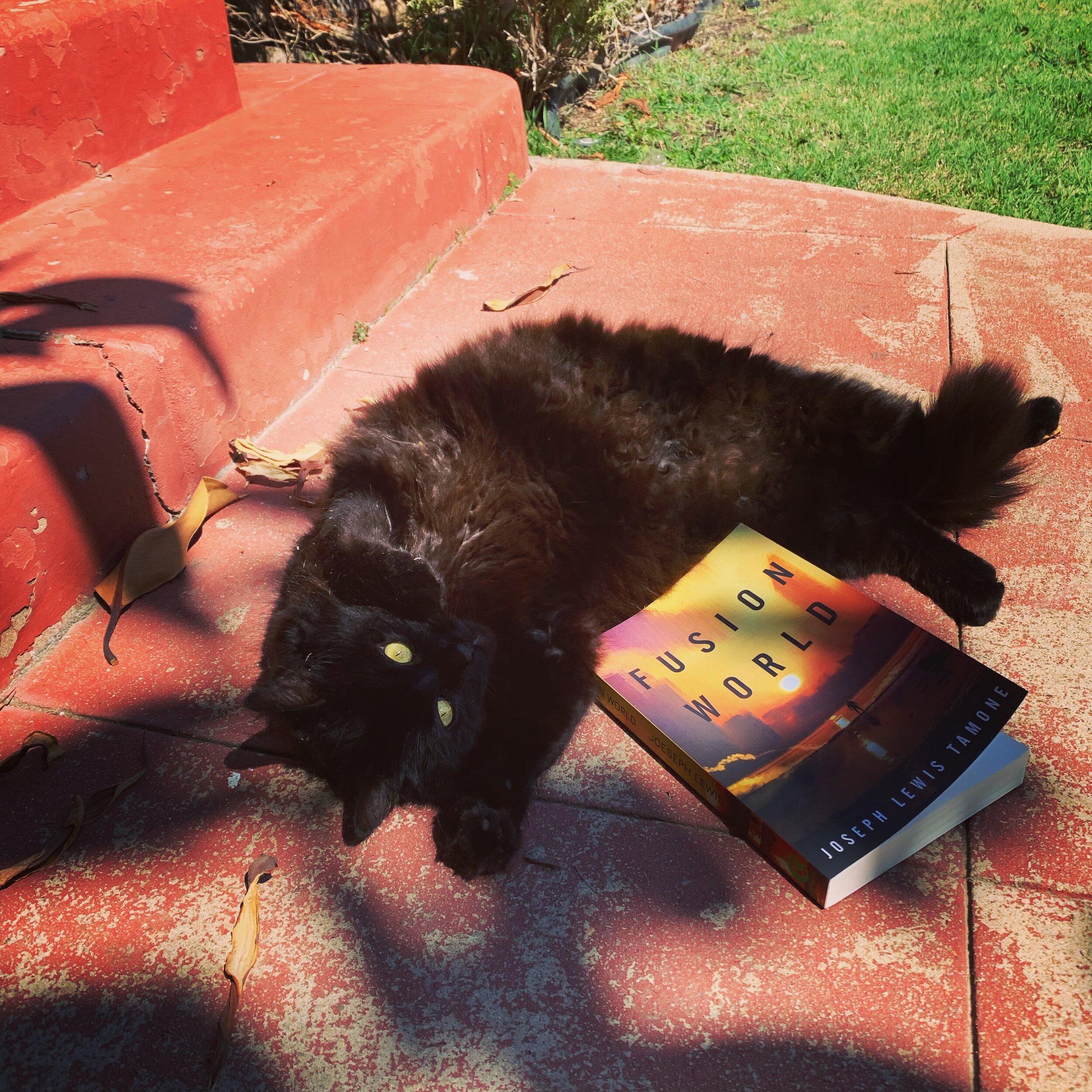 Jilly the kitty loves Fusion World.