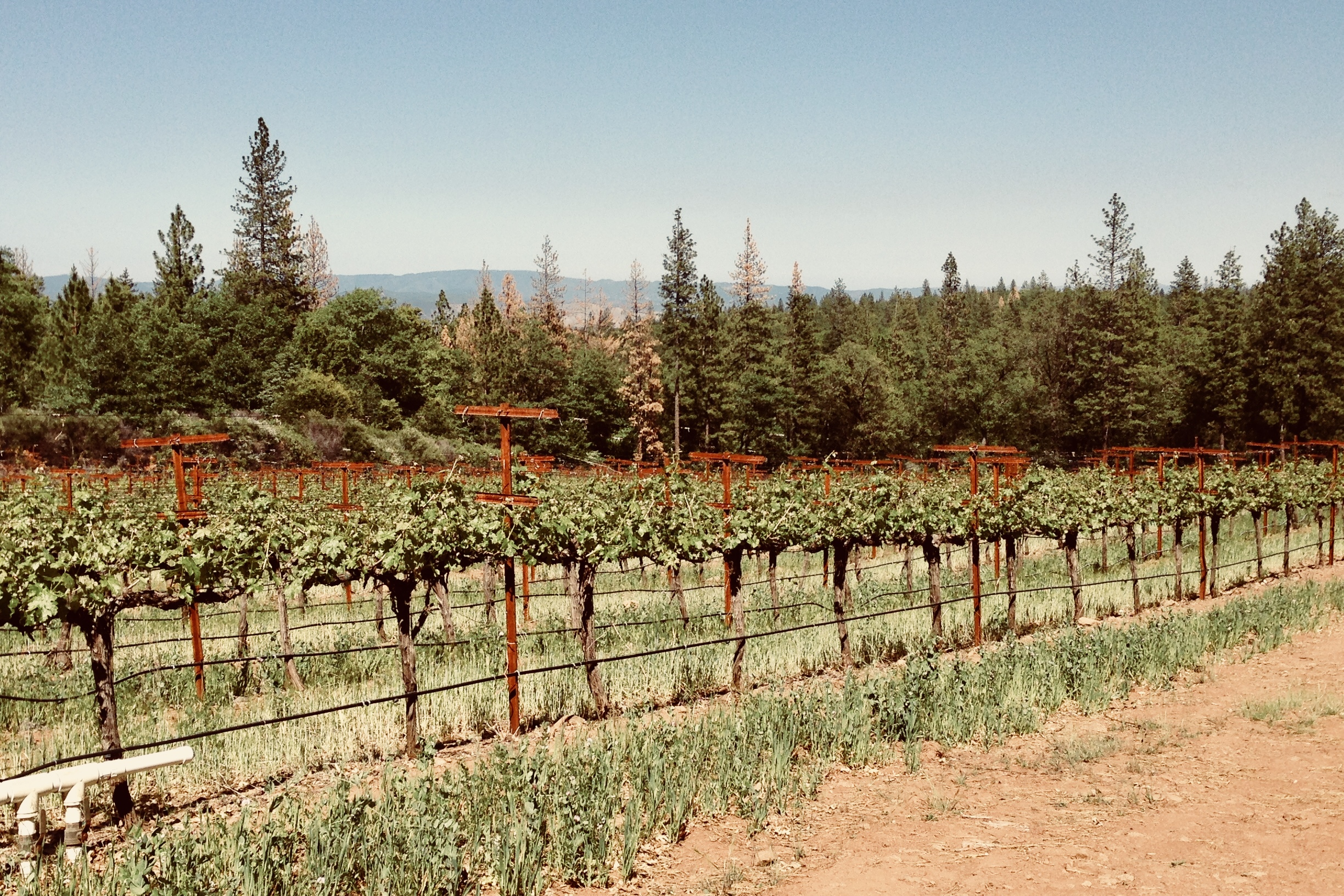 Fore Family vineyards -