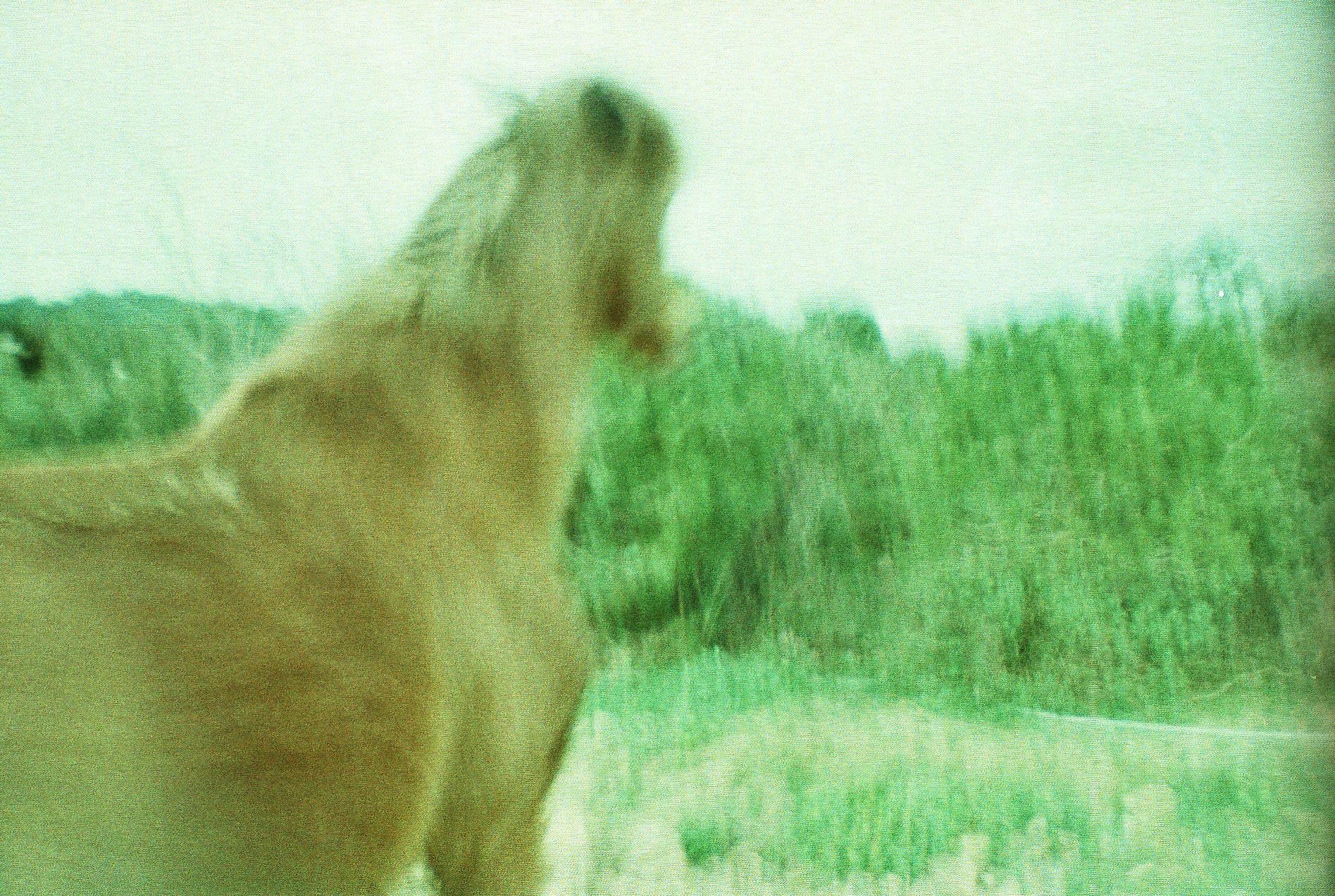 wild horse, Burgazada