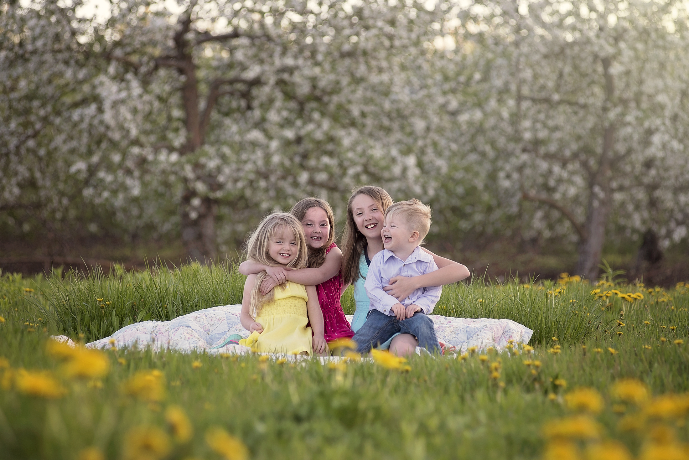 Outdoor Family Portraits taken in Sterling, MA spring apple orchards.