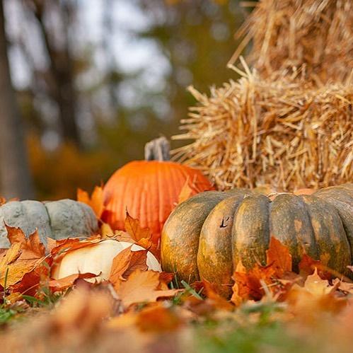 Happy Fall #happyfallyall🍂 🍁