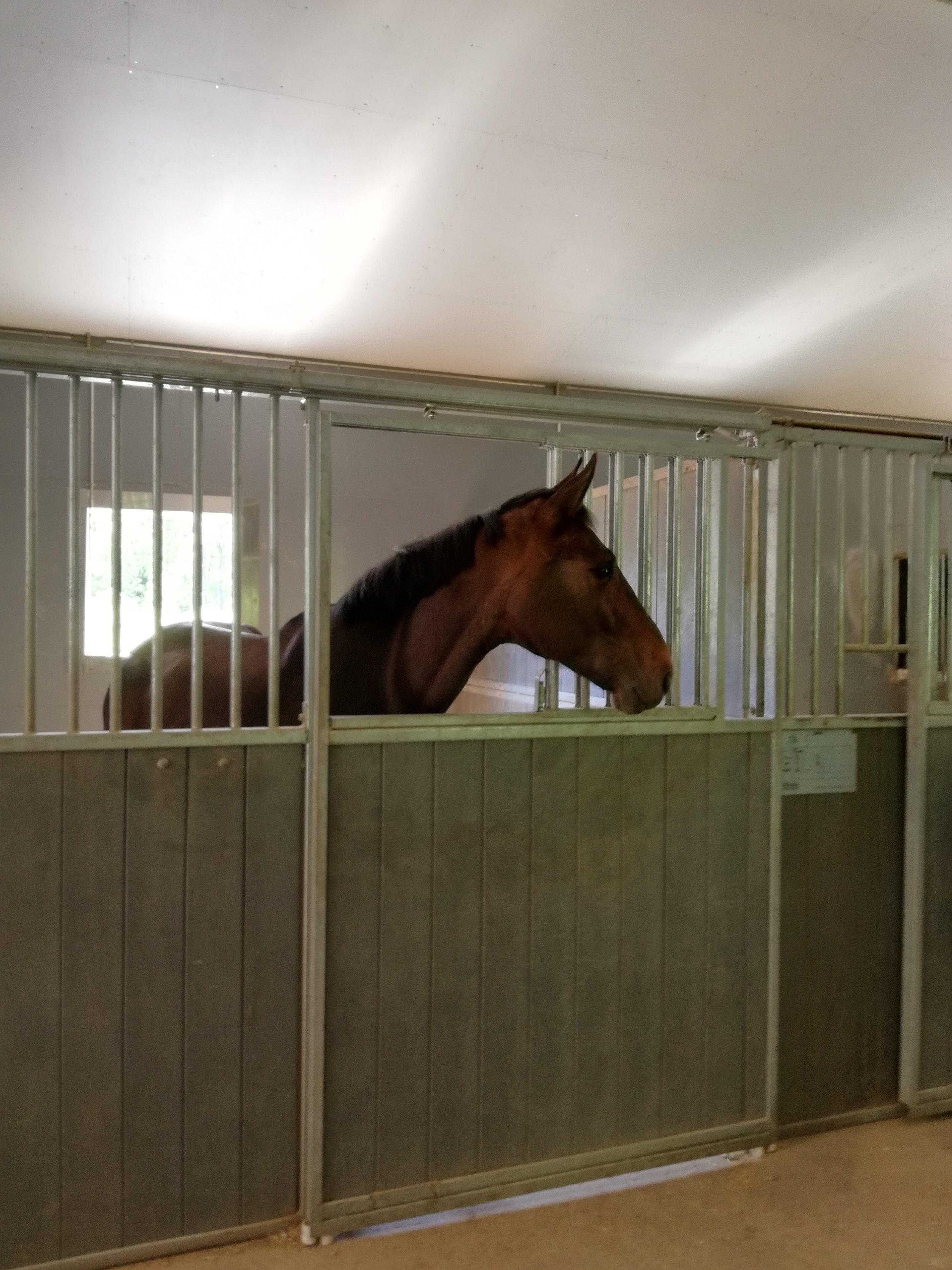 Hevosten Equitron hoidot ja kuntoutus | Tarttila, Valkeakoski