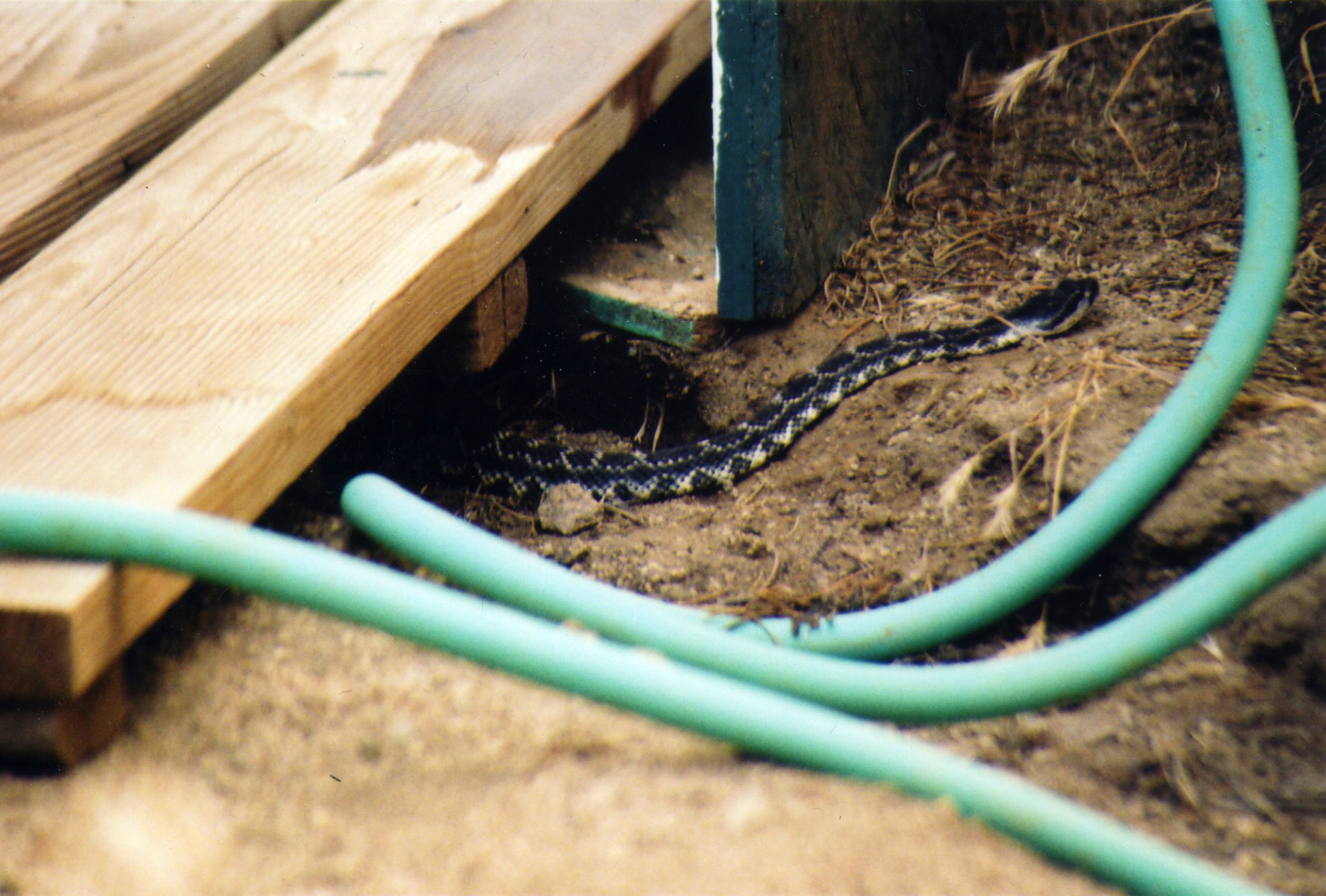 Visitor to the camp shower. Fortunately he/she was just leaving as we came into camp to take our showers.
