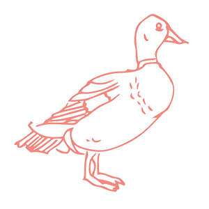 Duck Logo - Small Coral Outline - Ferme Reservoir.png