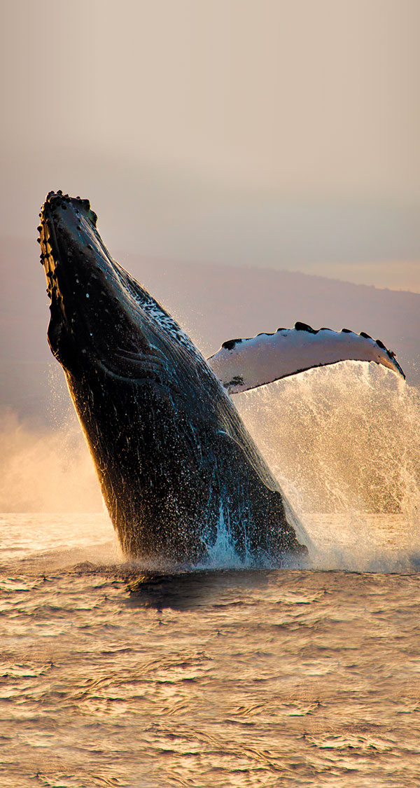 Trail-of-the-Whale_Sidebar-Image.jpg
