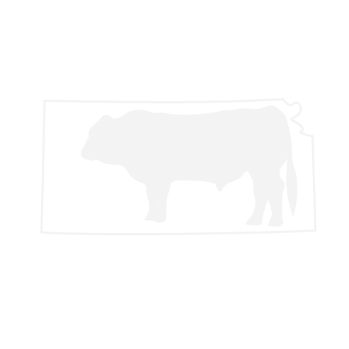 BullLogoUpdate2018 (3) White.png
