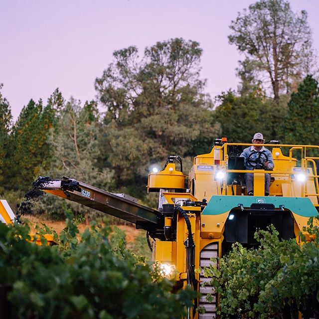 Harvest is a 2️⃣4️⃣/7️⃣ affair. The mechanical harvesting crews take to the vineyards at dusk 🌑 and continue a well into dawn ☀️ 📸@pausemc