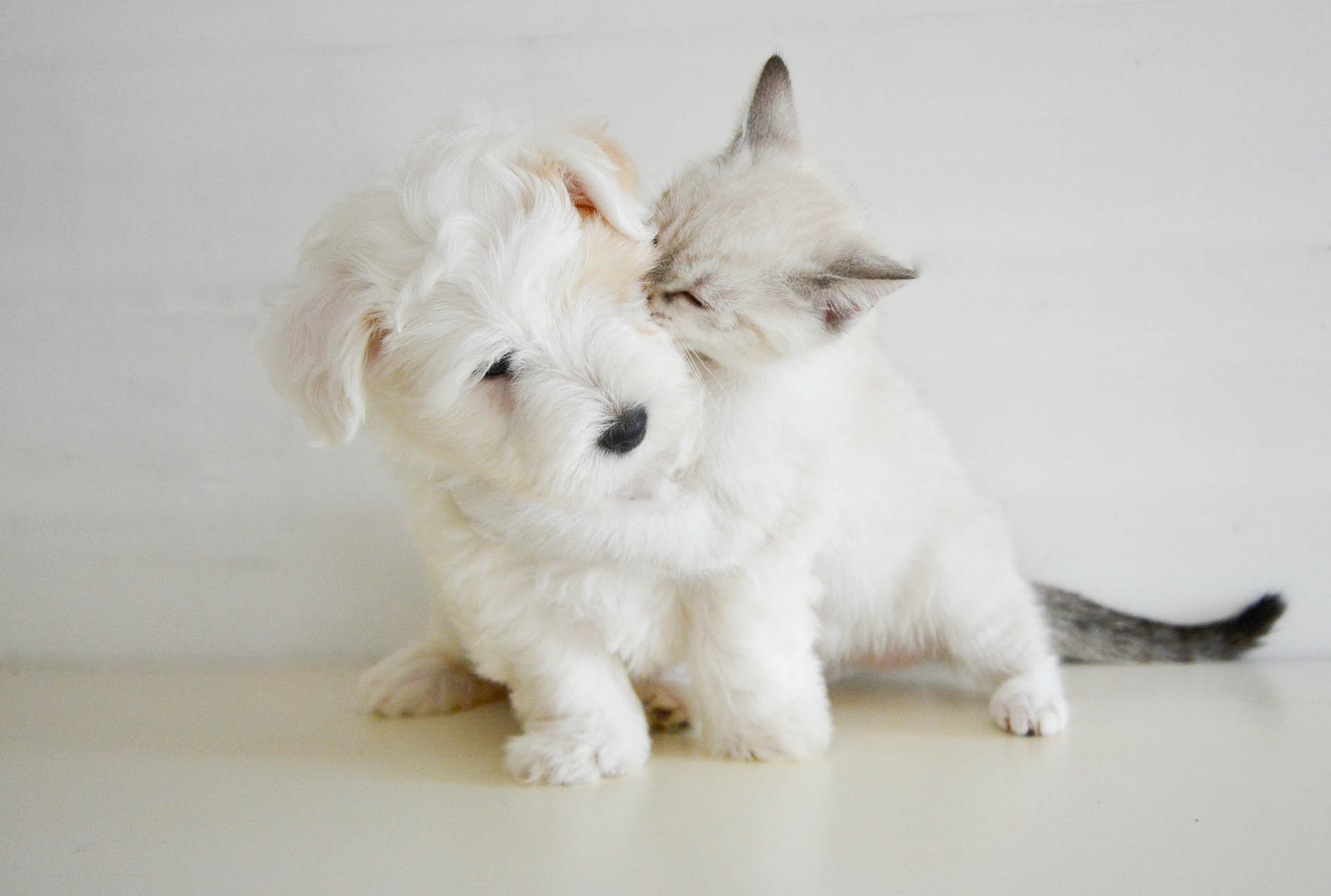 Thinking of Getting a New Puppy? New Puppy Guide Steveston Animal Hospital