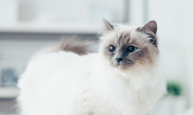 Thinking of Getting a New Kitten? New Kitten Guide Steveston Animal Hospital