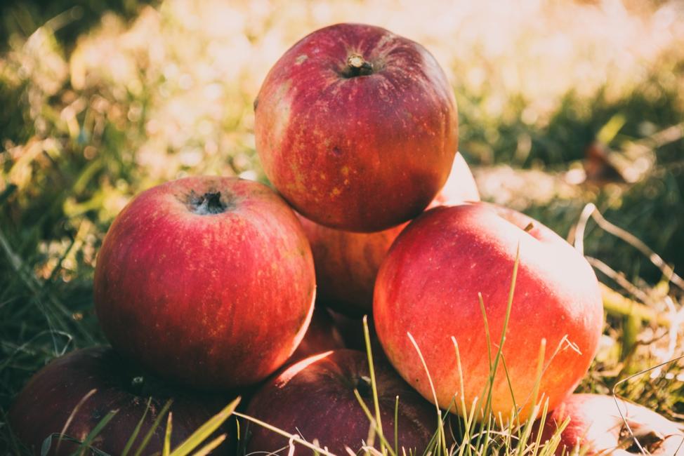 Fall Food Guide from Rubies Home Furnishings