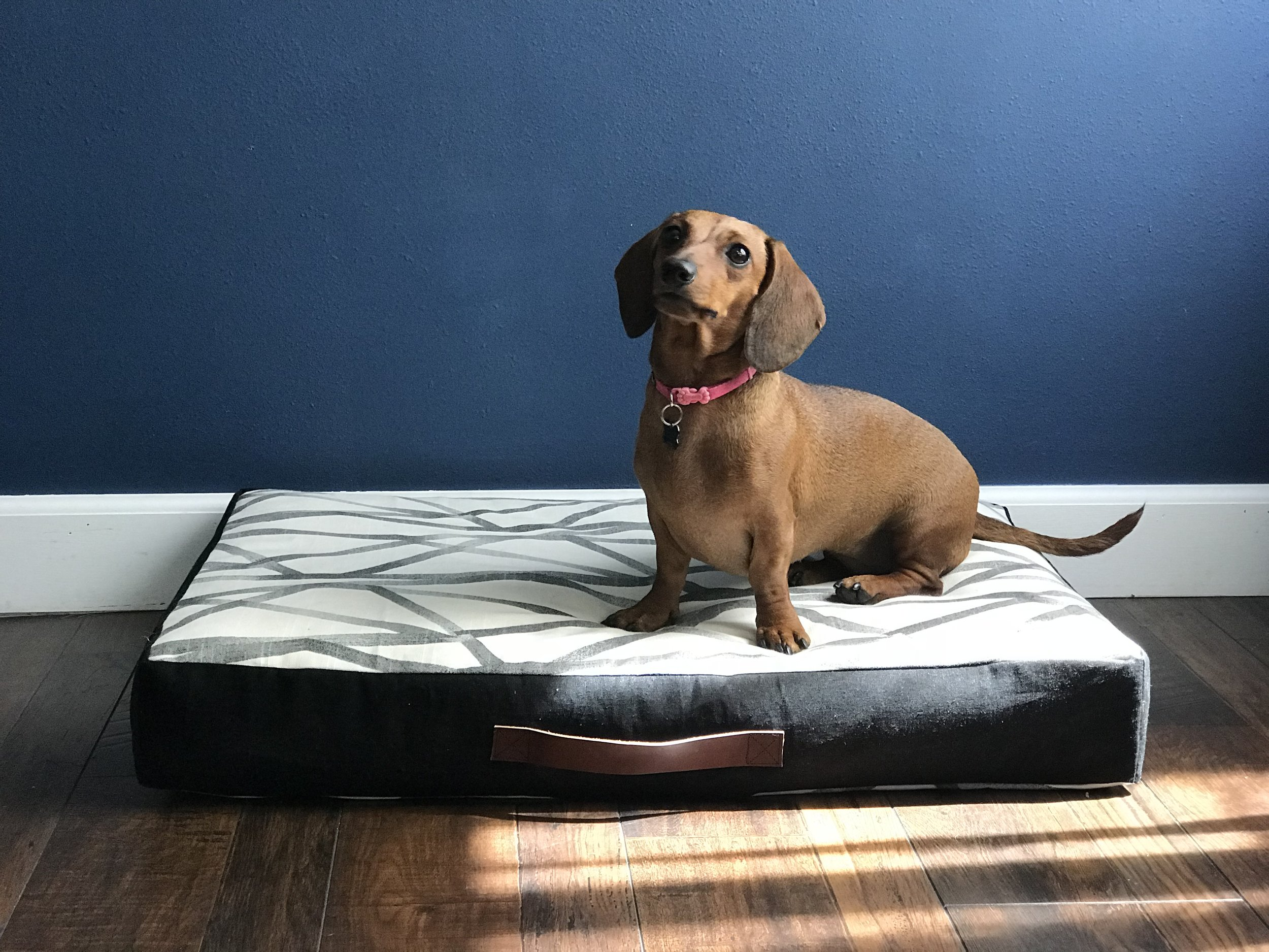 Beans modeling our Charlie Dog Bed