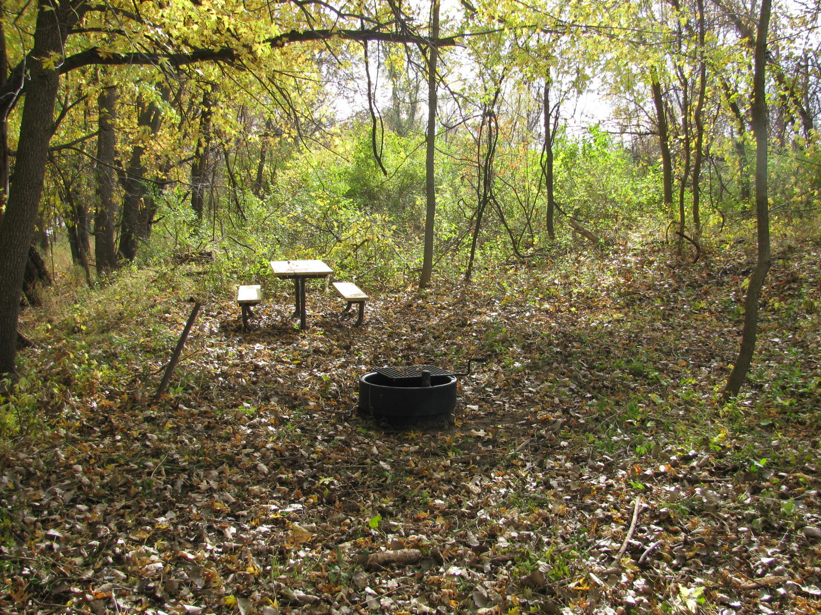 One of the primitive campsites on Foster and Cloquet Islands.