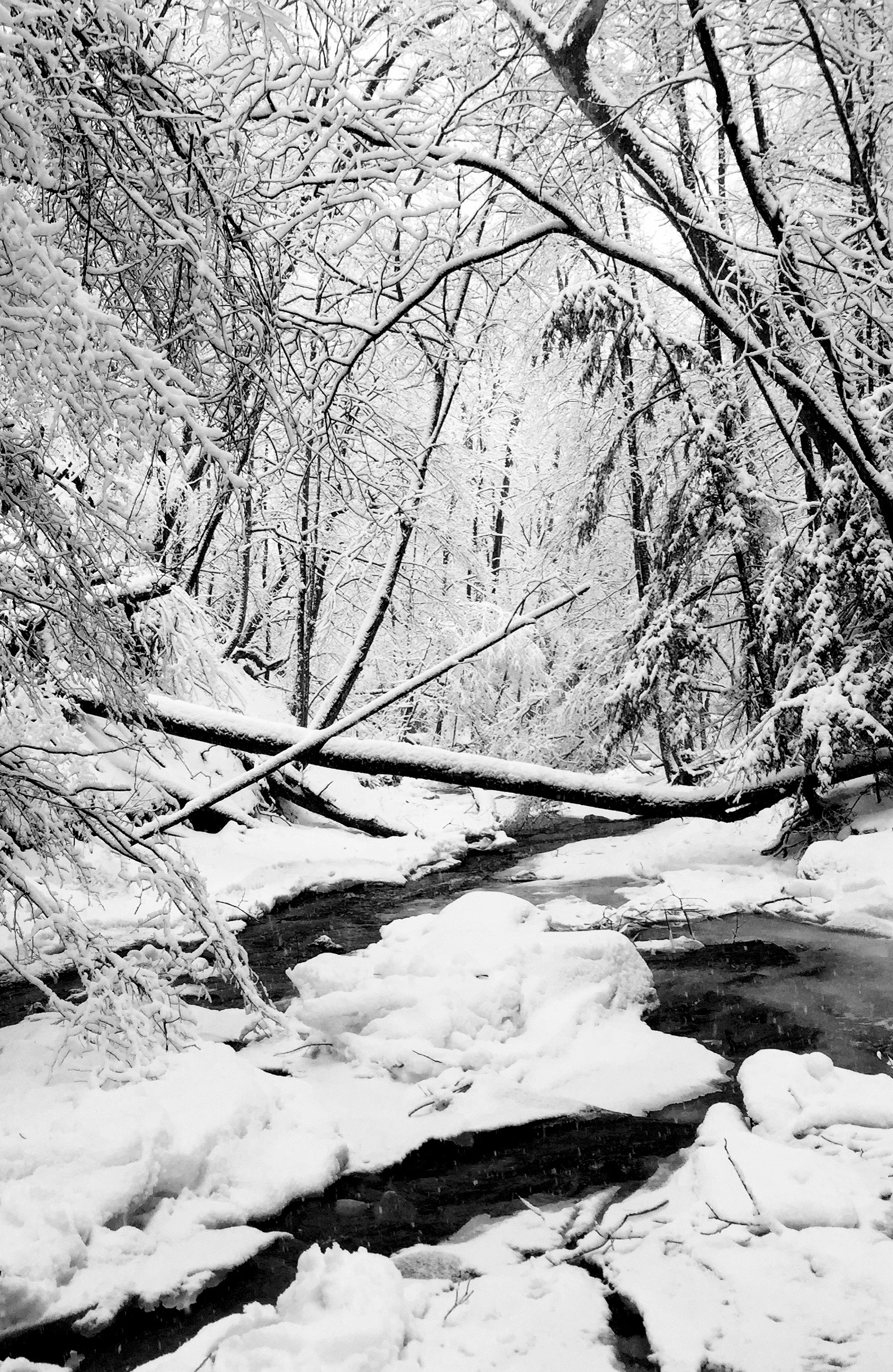 The brook is at its most magical—and most treacherous—in winter. Be wary.