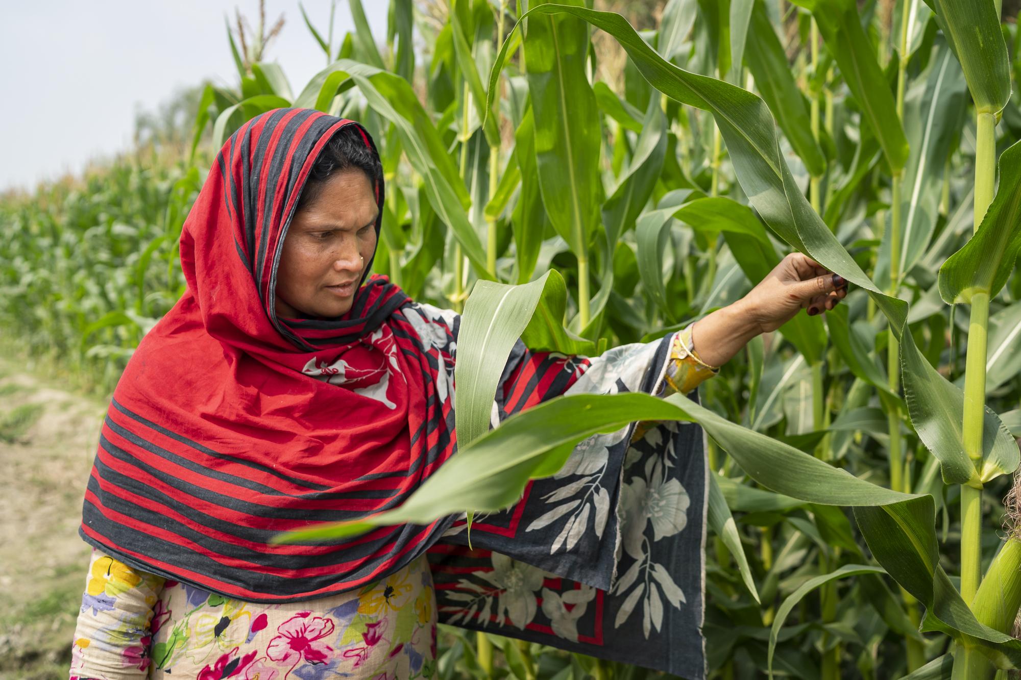 ConorAshleigh-2019-ACIAR-SDIP-Bangladesh-webres-371.jpg