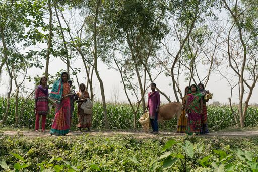 Women in Bihar are increasingly leaving the paid workforce, both for distress and prosperity related reasons. Distress related withdrawal includes not having time for paid work when daily chores take up too much time. Here a group of women walk out along a path leading into farming fields to collect fodder for their animals in Dogachi village, Purnea District, Bihar, India.