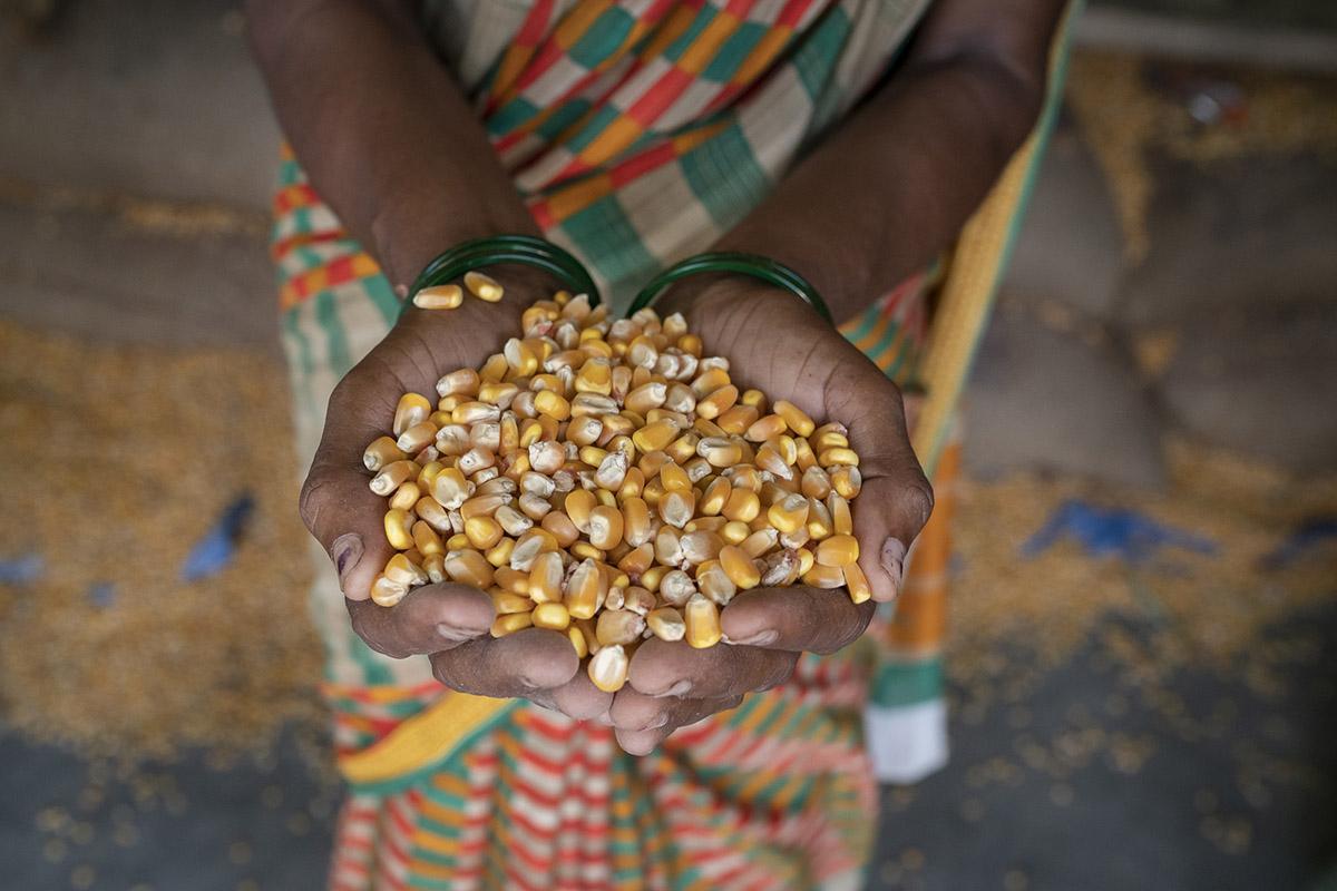 ConorAshleigh-©2018-SDIP-ACIAR-Bihar-webres-584.jpg