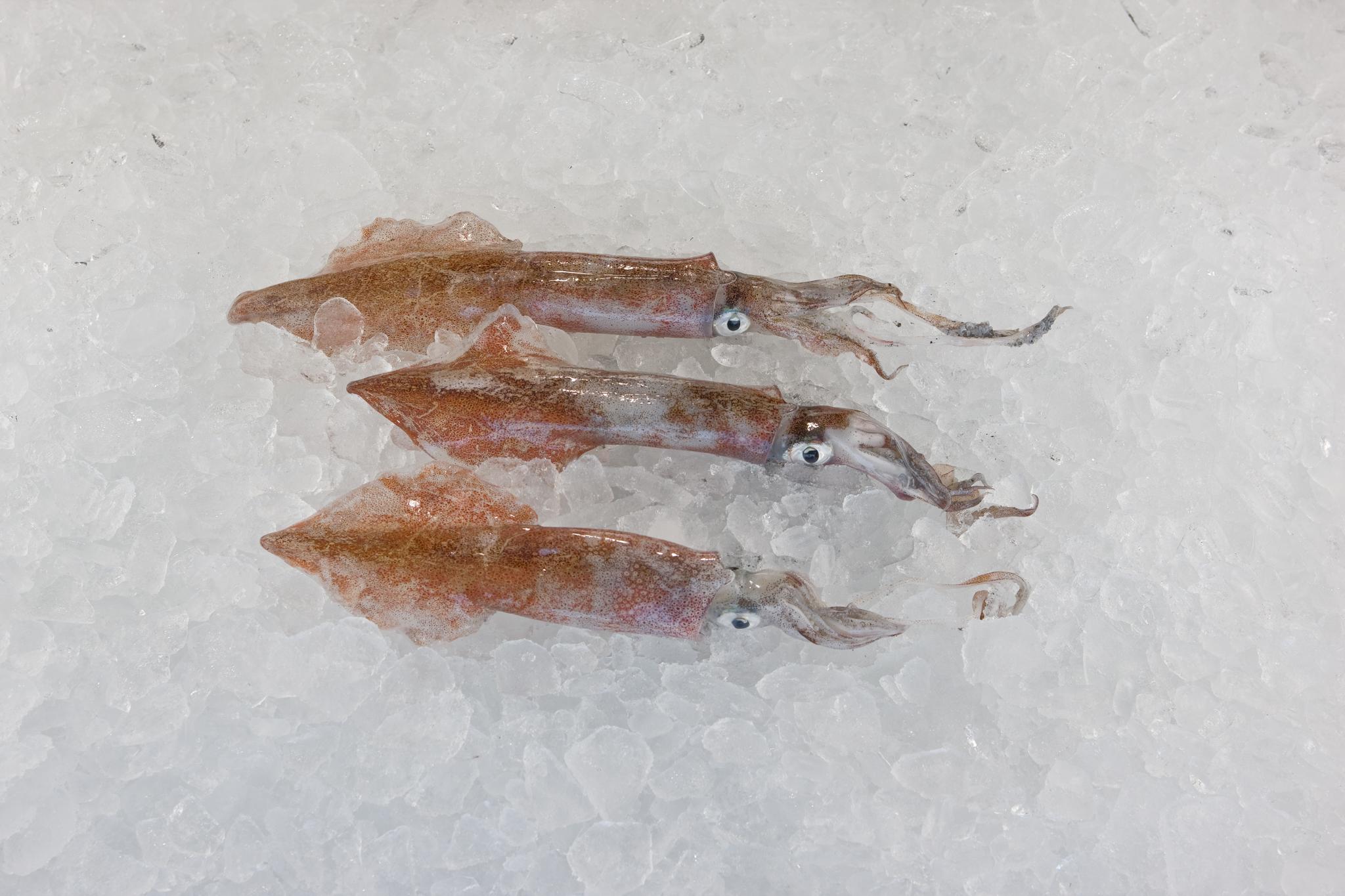 Whole (Dirty) Loligo squid.