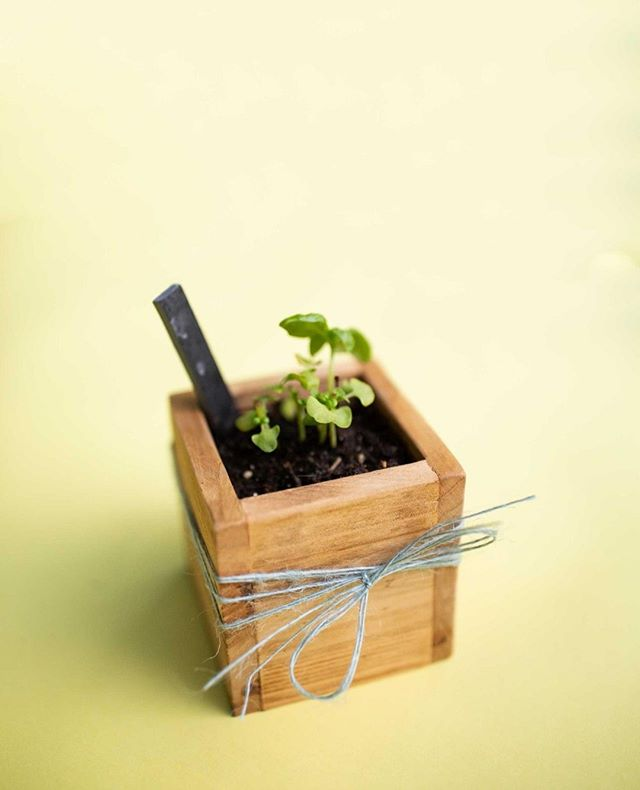 Ever wanted to grow herbs in your kitchen window? Try our new C U B E Herbs. Tiny, eco-friendly wood boxes that let you grow your own herbs and come with a beautiful real slate plant marker.⠀ ⠀ https://www.etsy.com/listing/694045732/genovese-basil-window-cube-herb-kit⠀ ⠀ #herbs #growkit #basil #etsy #shop #growherbs #garden #gardening #gardeninggift #gardeninspiration #vegan #vegetarian #slate #ecofriendly #biodegradable #culinaryherbs #foodie #freshbasil #farmersmarket #growfoodnotlawns #organicliving #cleaneats #healthyfood #oregano #catnip #rosemary #citrus #summer #gifts #etsyshop