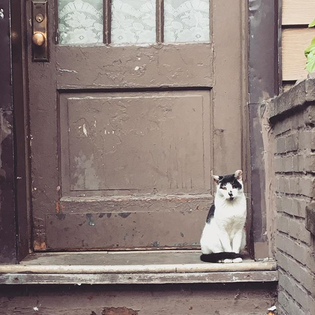 Guardian of Williamsburg