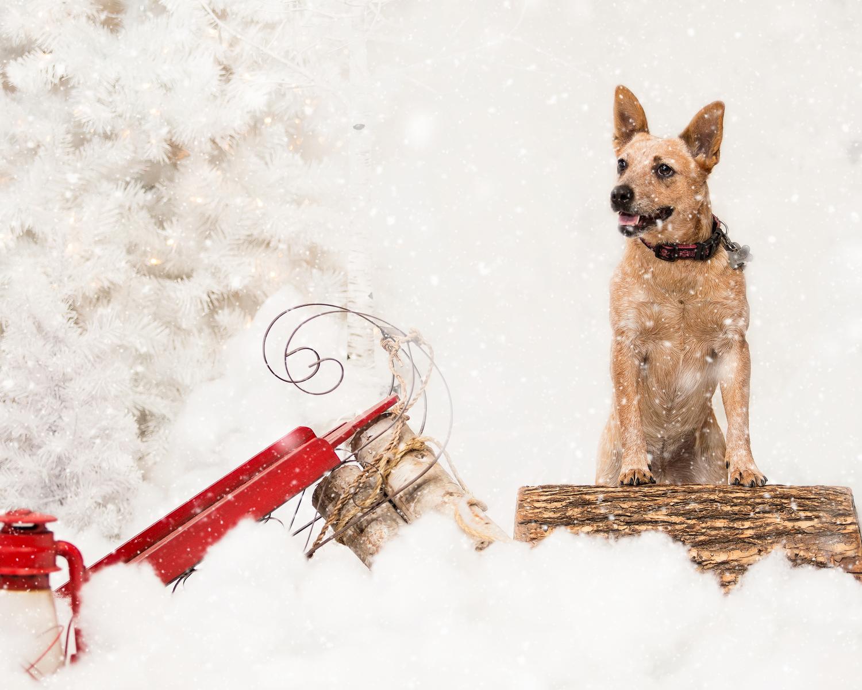 Portraits By Matthew Pet Family Portraits