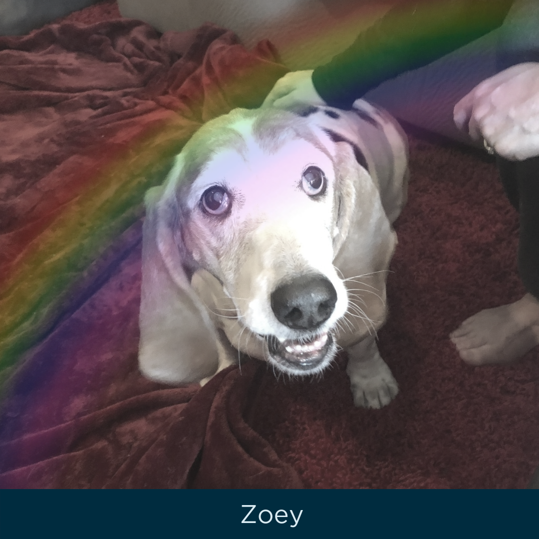 zoey.png