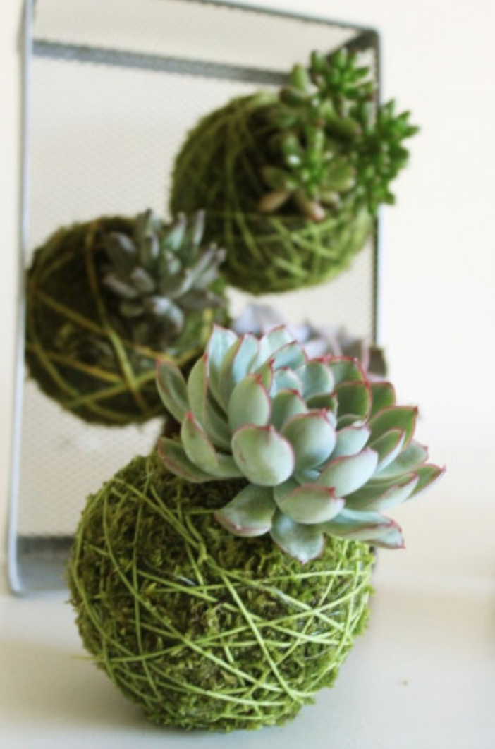 Plant-less houseplant. -