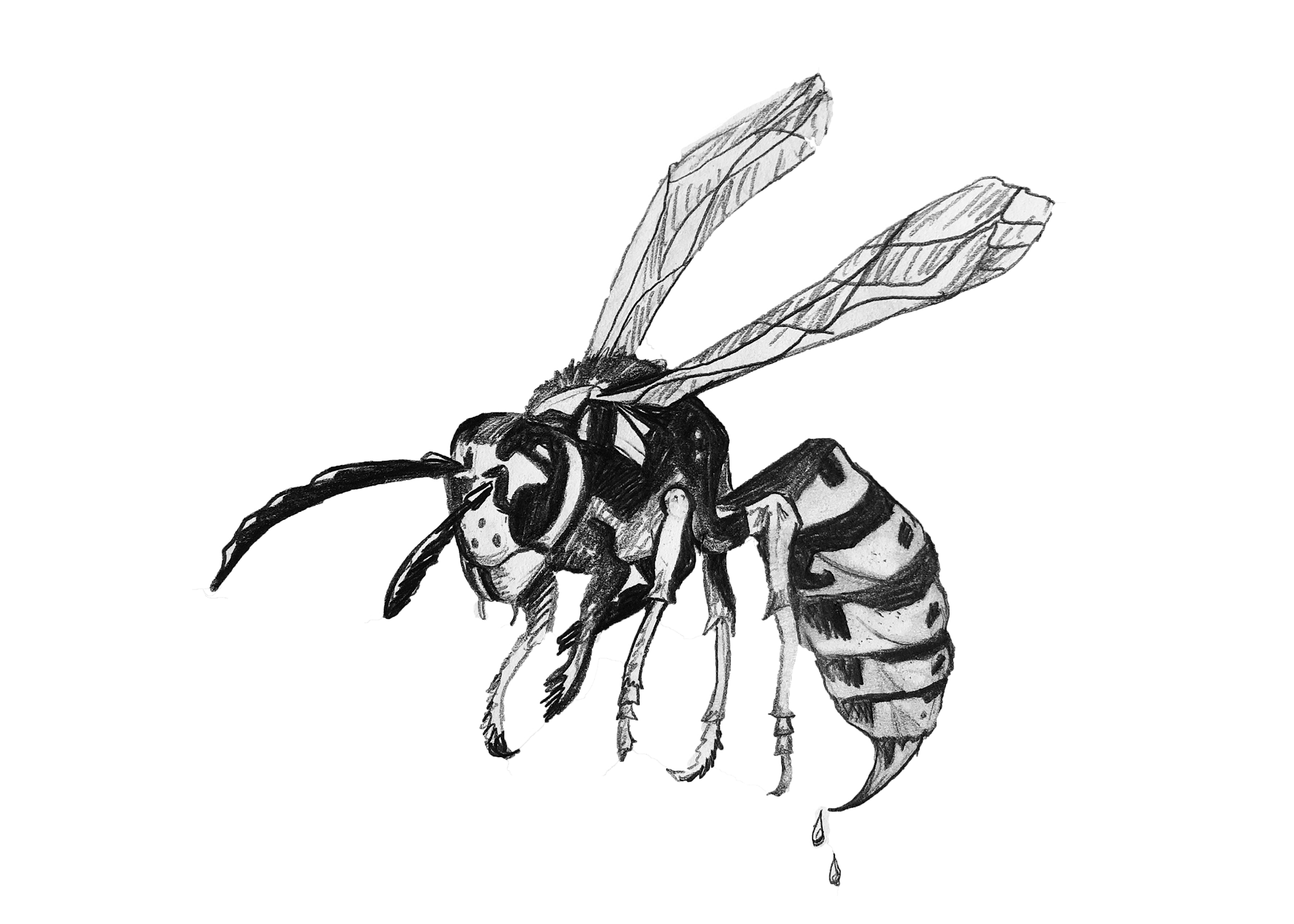 Meet Waspy - Waspy is our NEW Mascot & the feature of our NEW logo. You can spot him on our newly painted Truck and all over our NEW website. Waspy was hand drawn by our friend and local artist Caitlin Daly. She also designed the nest, wasp, house, and various other graphite vectors featured on our homepage. Click Here to Read More about Caitlin, Waspy, and our New brand.
