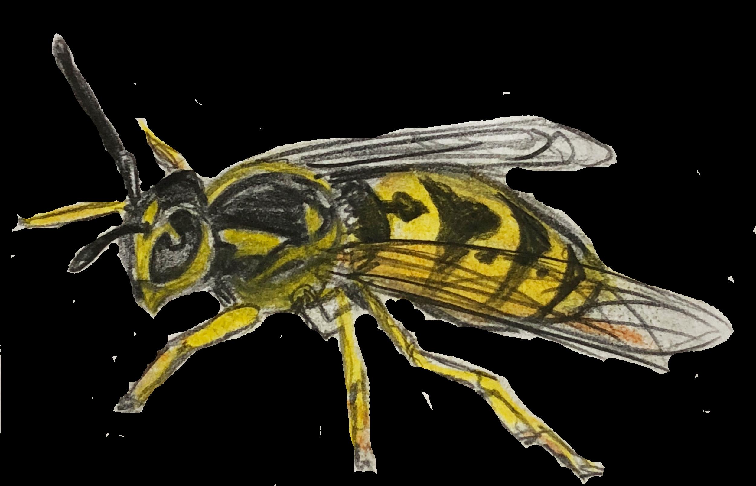 Wasp 3.png