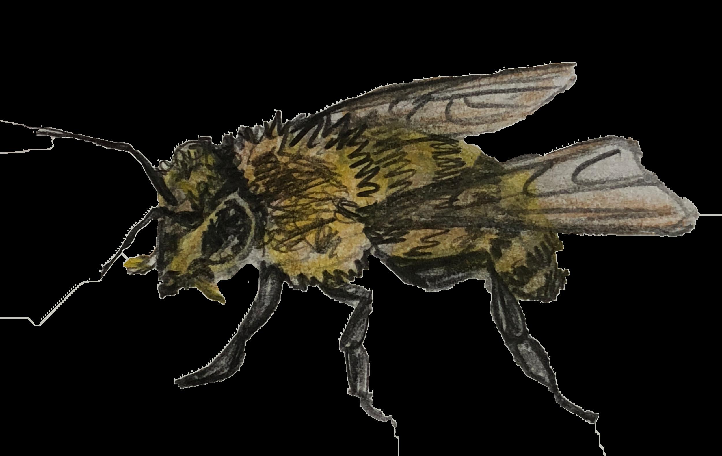 Wasp 4.png