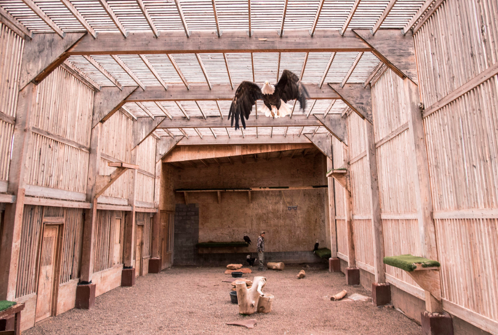 """""""Native American Demand Is Driving a Black Market for Eagle Feathers"""" - Audubon Magazine"""