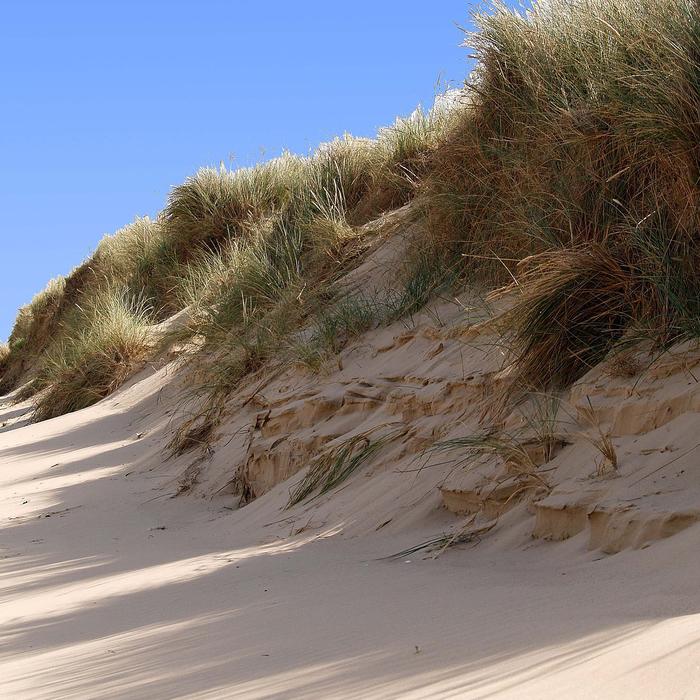 Sand-dune.jpg
