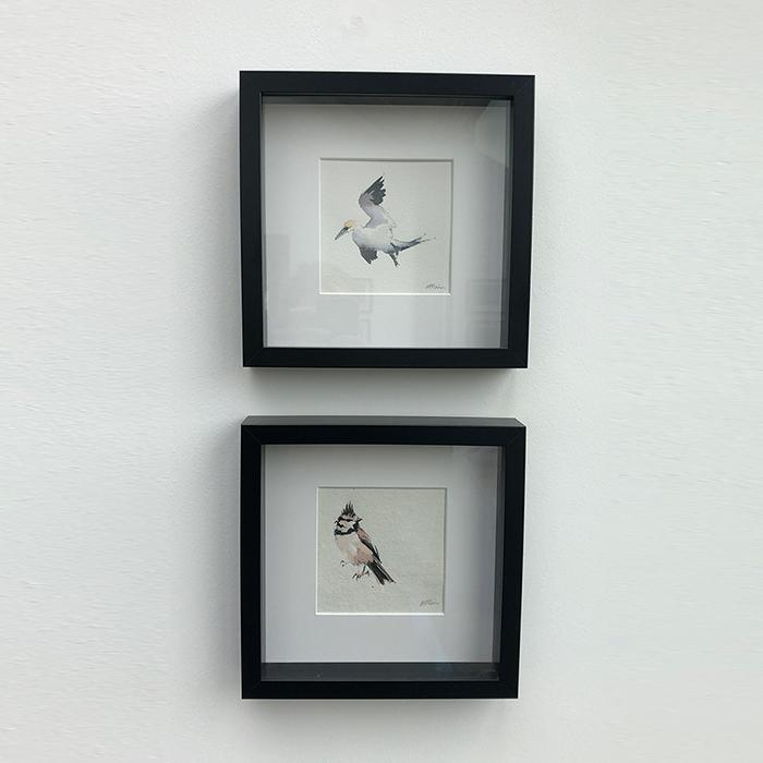 COASTAL BIRDS - WATERCOLOURS