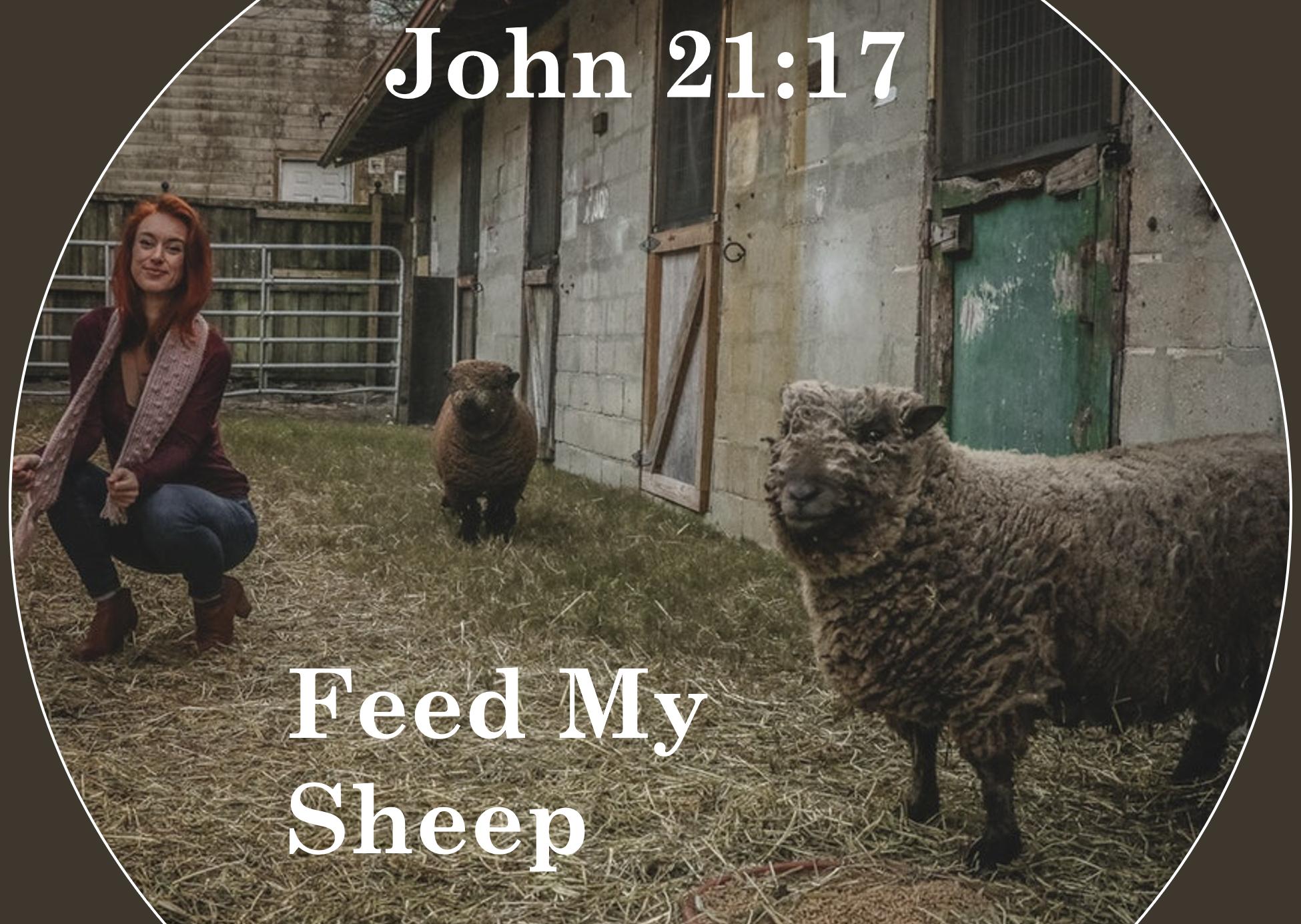 feed-my-sheep3.png