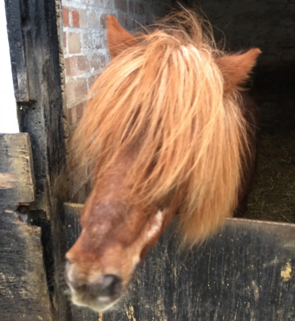 hairyhorse-940x1024.jpg