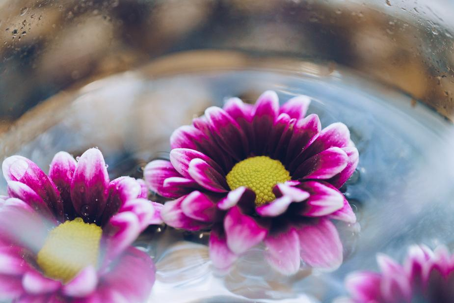 flowers-in-water-close-up_925x.jpg