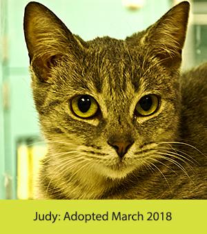 Judy_Cat.jpg