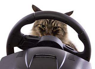 Cat_Driving_WebReady.jpg