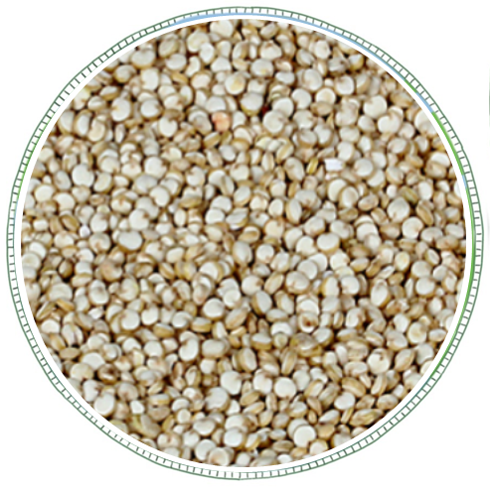 Quinoa -
