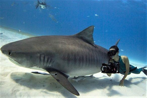 shark girl.jpg