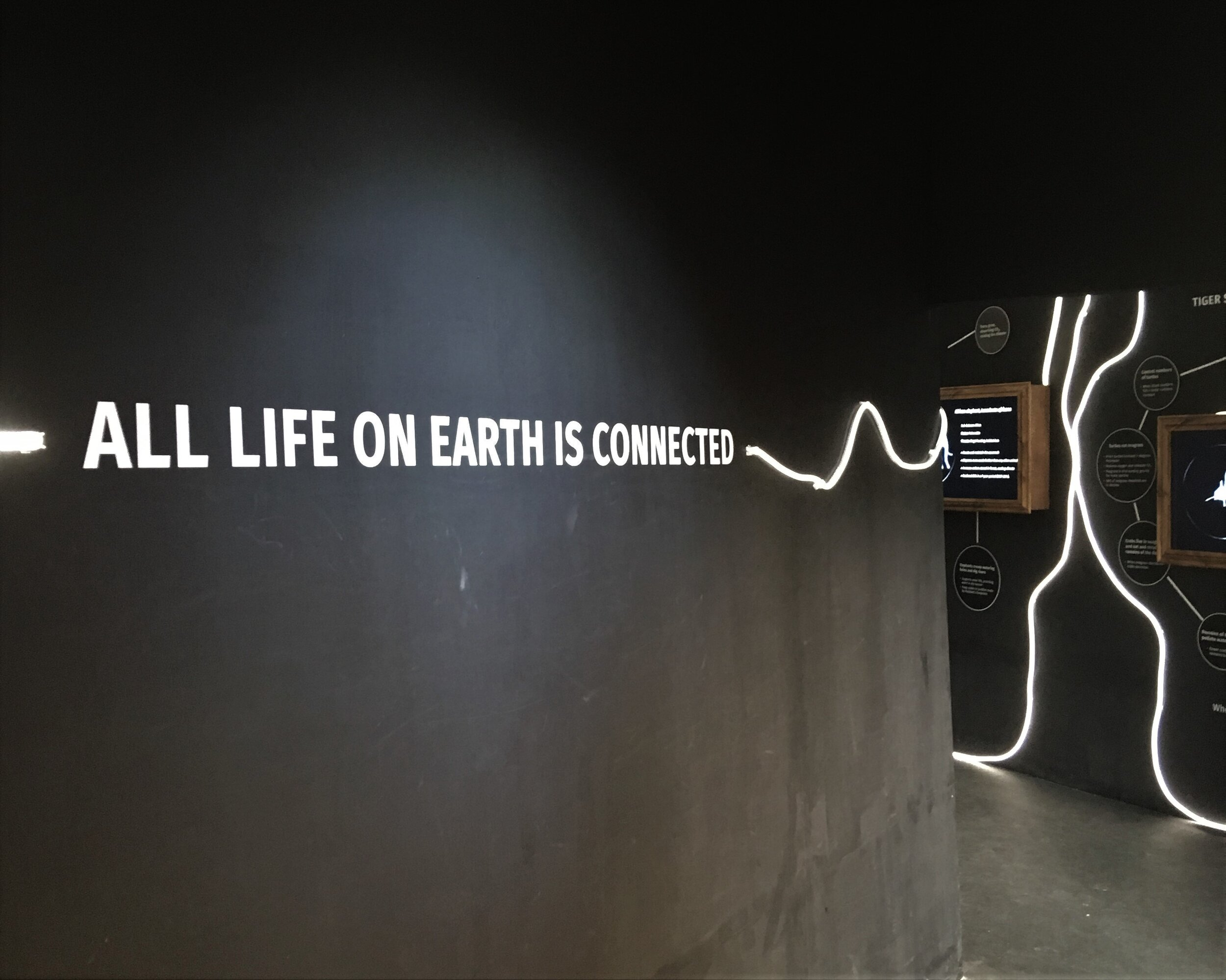 all life on earth is connected.jpg