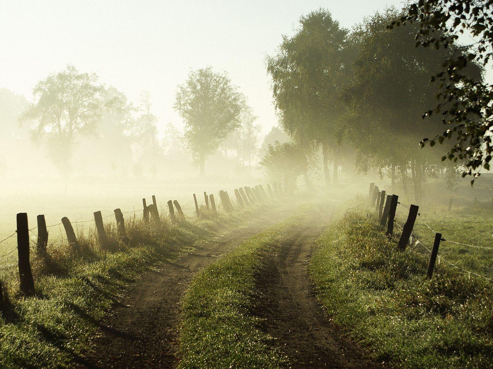 misty.jpg