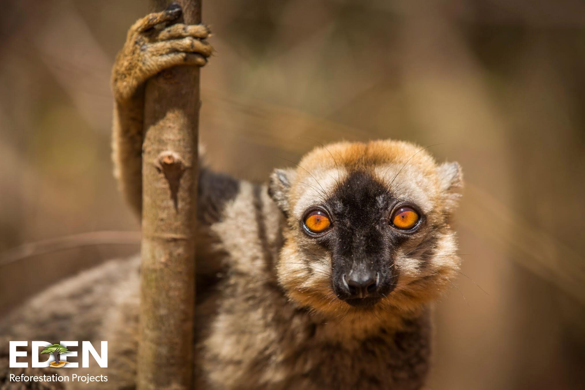 Supplemental-Sapling_Madagascar_Eden Watermark.jpg
