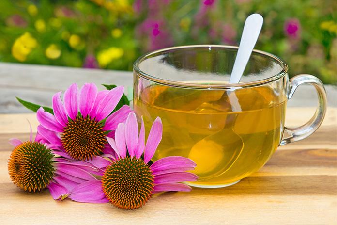Herbal+support+echinacea.jpg
