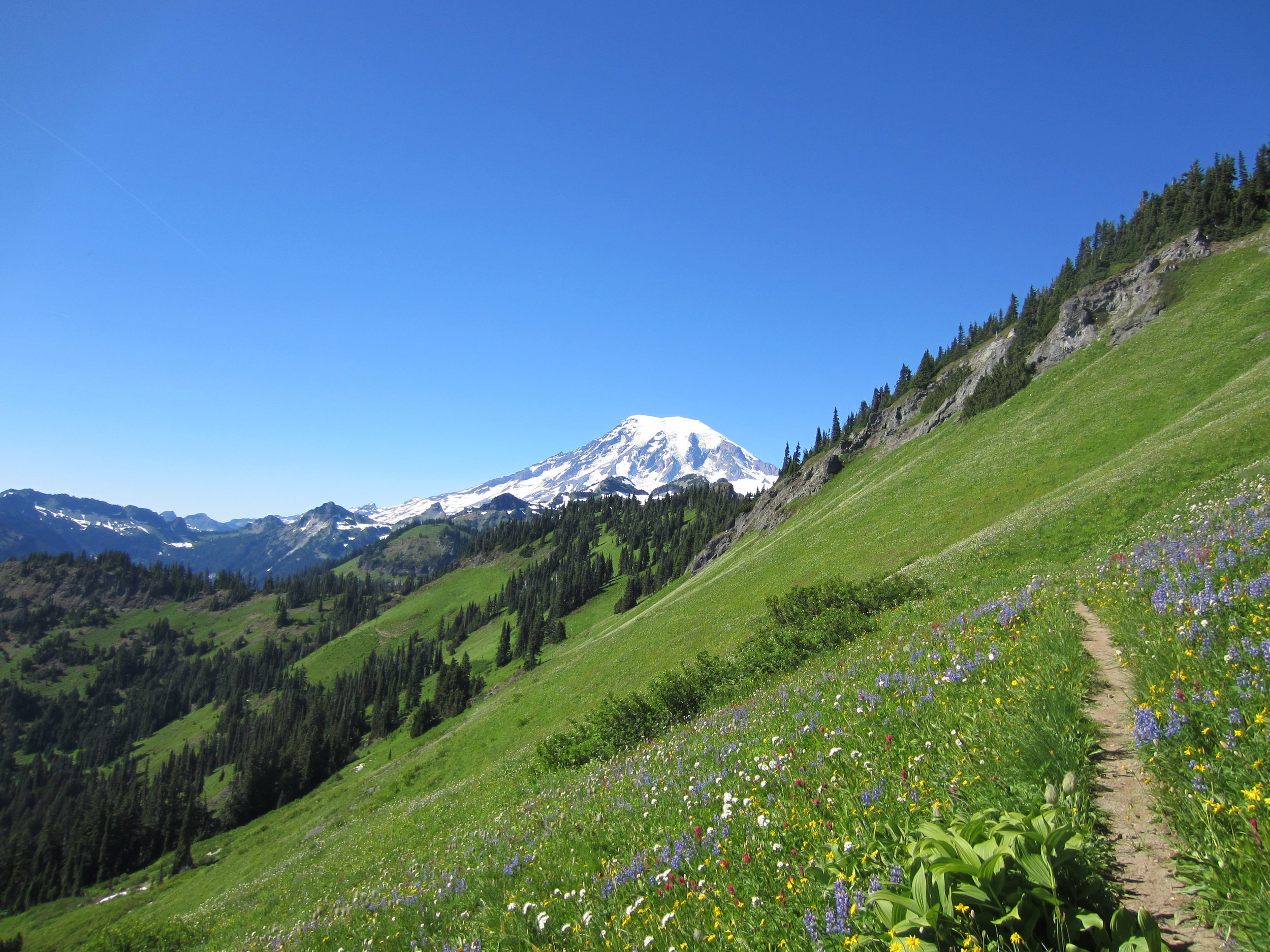 An outdoor dirt trail in a field of wildflowers with trees and a mountain with snow and blue sky