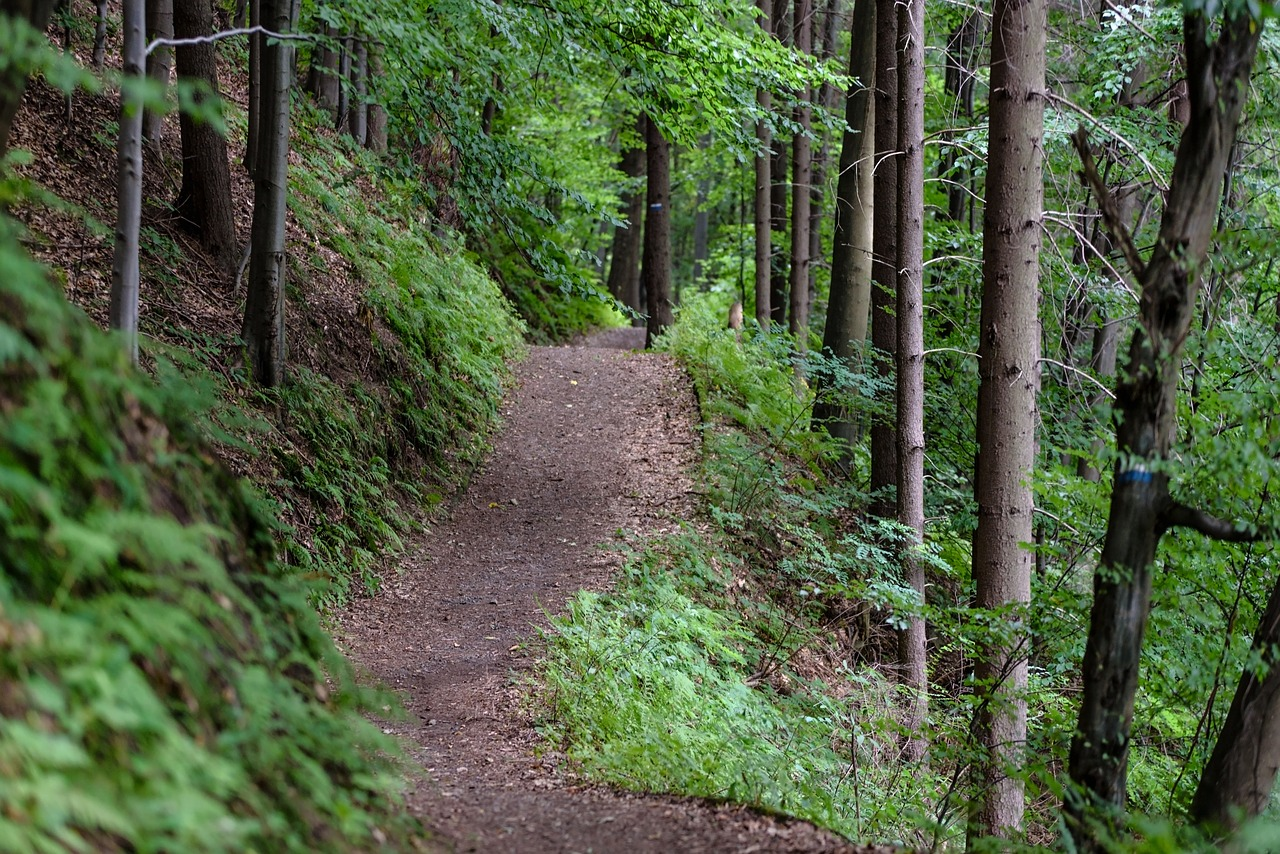 Outdoor dirt hiking trail surrounded by trees and bushes