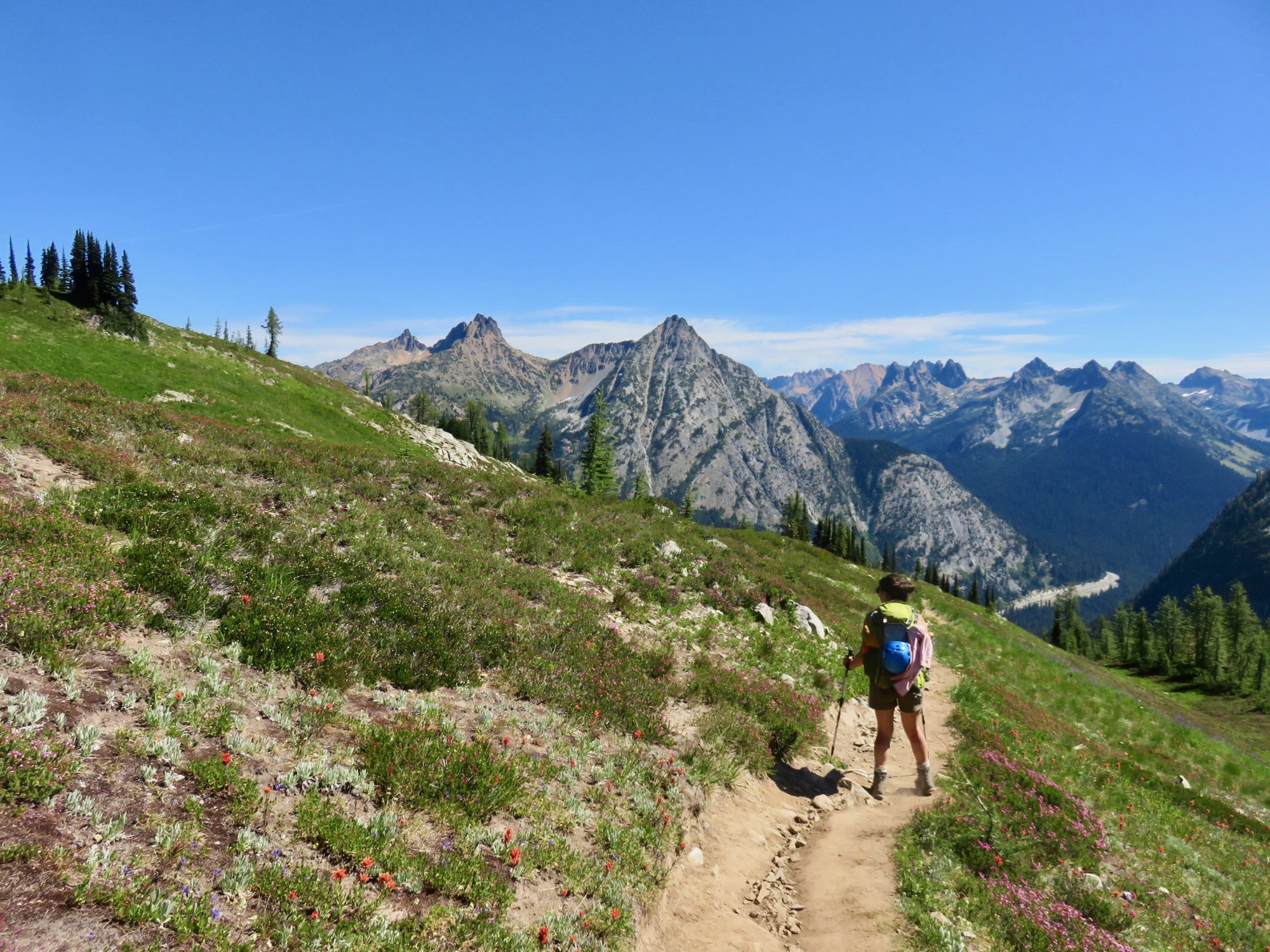 An outdoor dirt trail in a field of wildflowers with a women wearing a backpack and blue sky