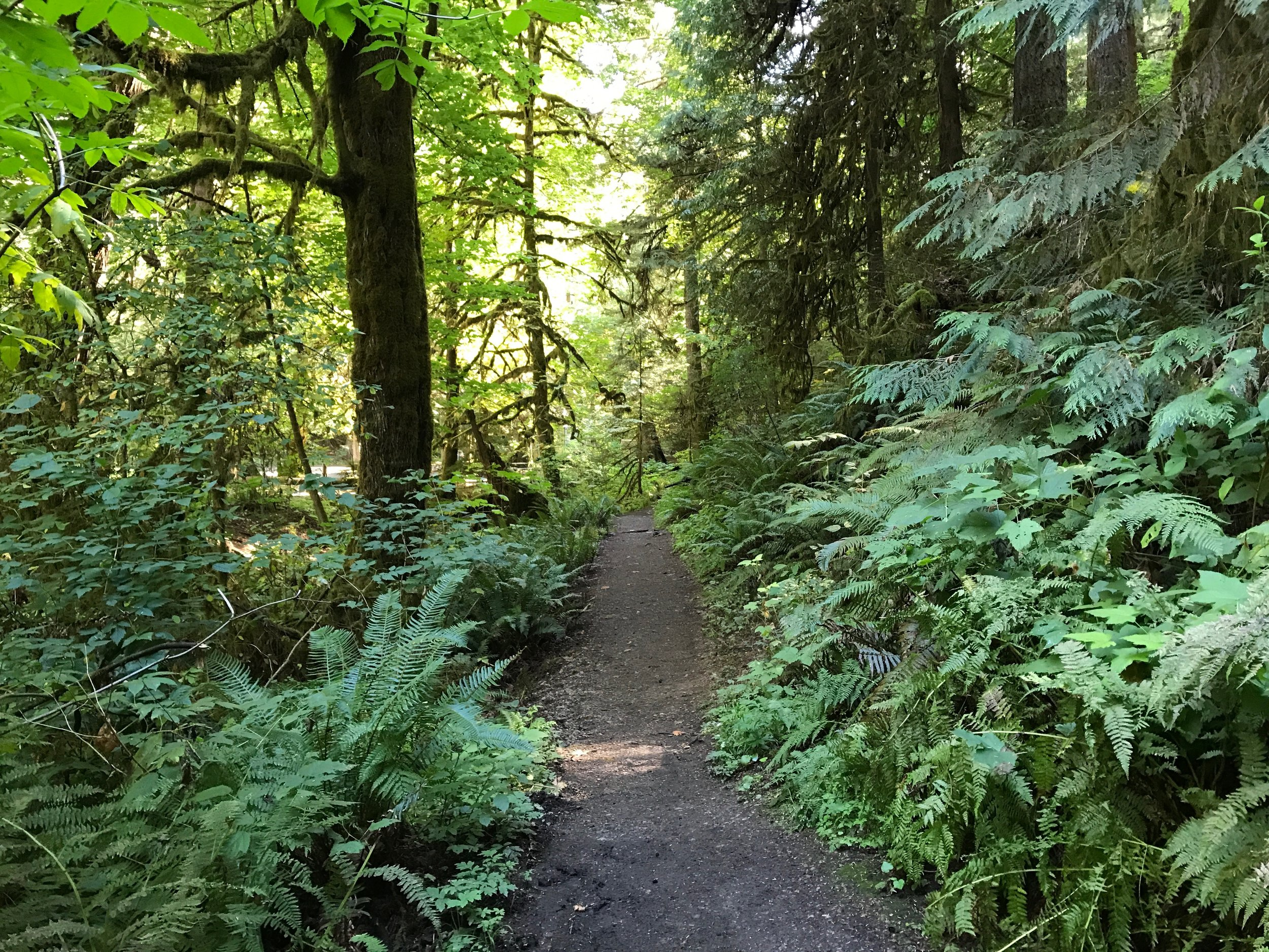 A dirt trail surrounded by green ferns and evergreen trees.