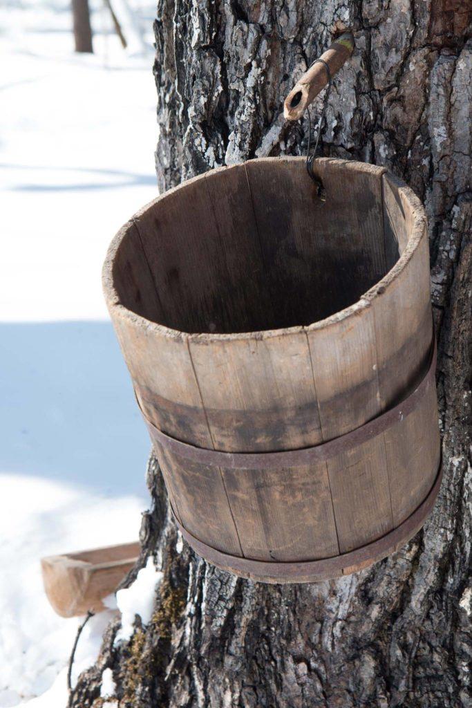 sap-bucket-683x1024.jpg